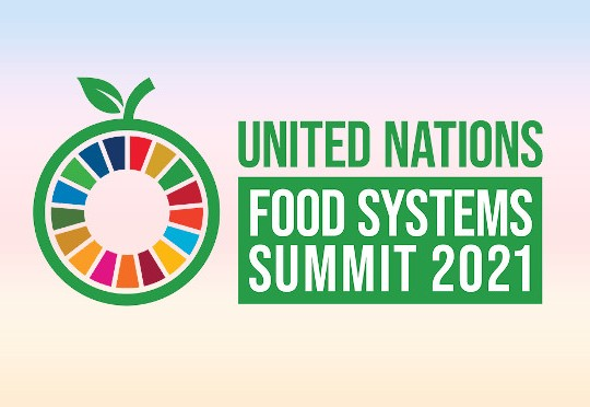 The UN Food Systems Best Small Business competition: SMEs and startups time to shine