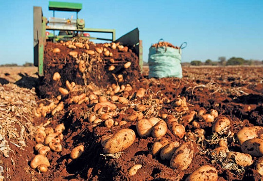 AKILIMO digital platform improves potato yields in Rwanda